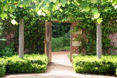 Pleached Tilia trees above clipped sarcococca. The Walled Garden at Broughton Grange by Tom Stuart Smith