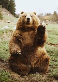 Every fucking Sunday Picdump - Animals wild, Animals cutest, Animals funny, Animals drawings Nature Animals, Animals And Pets, Baby Animals, Funny Animals, Cute Animals, Baby Pandas, Beautiful Creatures, Animals Beautiful, Beautiful Beautiful