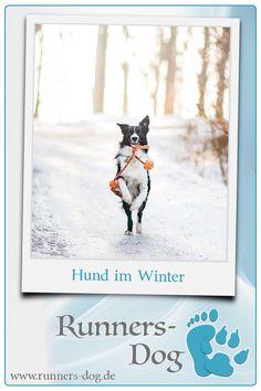 Bei diesen 3 Aktivitäten wird dein Hund im Winter viel Freude haben! ✓ Außerdem erhältst du hilfreiche Tipps zur Fellpflege im Winter. ► Hier klicken!