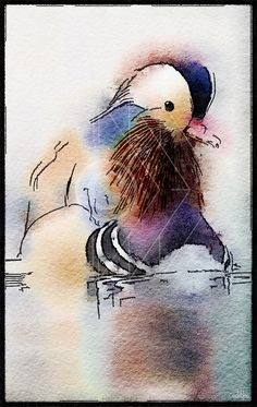 Mandarin Duck (b) - Printable Art, Instant Downloadable Images, Fine Art. by edeblas on Etsy