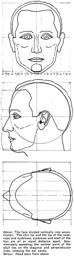 Above: The face divided vertically into seven. Center: The chin tip and the tip of the nose, nose and eyebrows, eyebrows and start of the hair are all an equal distance apart. Geometrically speaking, the central point of the skull lies on the diagonal and perpendicular lines, crossing the ear cavity. Below: Head seen from above.