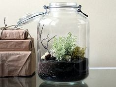 Terrariums look super classy with all black sand/soil