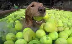 Daily Cute: Rescue Dogs Swim With 4,000 Tennis Balls | Care2 Healthy Living