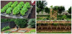 Ai paleti din lemn? Foloseste-i pentru a sadi legume si zarzavaturi  Ramanem tot la capitolul gradini si va propunem in articolul de astazi sa urmariti idei practice de a folosi paletii din lemn pentru a sadi