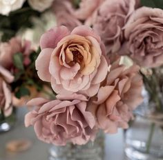 Koko loco garden roses: all year in limited quantities $$$$