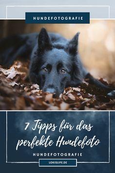 Ihr möchtet das perfekte Foto von eurem Hund machen, aber irgendwie klappt es einfach nicht? Dann lest hier 7 hilfreiche Tipps für bessere Hundefotos. || #LokisLifeBlog #Hundefotografie #Fototipps #Hund #Fotografierenlernen Dogs, Movie Posters, Photography, Dog Things, Perfect Photo, Dog Care, Dog Food, Film Poster, Doggies
