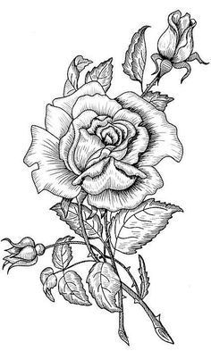 Anyak Napi Transzfer Kepek Roses Drawing Colouring Pages Coloring Pages