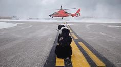 Airport K-9 Piper is Top Dog!