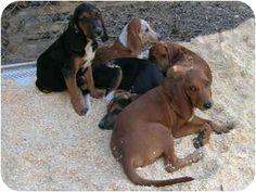 The Dog House Paragould Ar