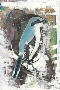 Philip Ryland Great Grey Shrike, - 2012 Currently wintering in a Surrey heathland near you. x oil and acrylic on plywood Shades Of Grey, 50 Shades, Original Art For Sale, Buy Prints, Pretty Pictures, Winter Wonderland, Saatchi Art, Graphic Art, Contemporary Art