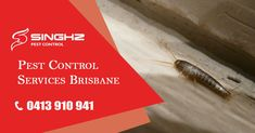 Silverfish are typically found inside the home and commercial buildings where they can cause damage to artificial silk, linen, and cotton. It takes extensive pest control knowledge to treat a silverfish infestation. If you notice signs of silverfish, call us as soon as possible. 📞 0413 910 941 #PestControl #PestRemoval #Brisbane