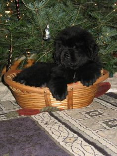 Who could resist a face like this under the tree <3