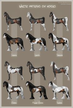 White patterns on horses by Aomori on deviantART
