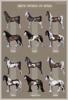 White patterns on horses by Aomori on deviantART