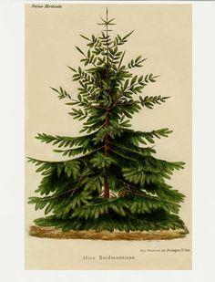 Dreaming of Vintage: Vintage Christmas Botanicals