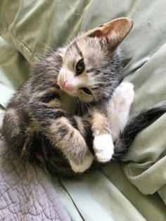 Cat Care Kittens Couple Found Kitten Darting In Front of Cars and Rushed to Save Him - Love Meow Kittens And Puppies, Baby Kittens, Cute Cats And Kittens, Kittens Cutest, Kittens Meowing, Cutest Pets, Fluffy Puppies, Ragdoll Kittens, Bengal Cats