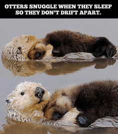 15 Animal Memes That Will Make Your Day So Much Better Funny Wild Animals, Cute Animal Memes, Cute Animal Videos, Cute Animal Pictures, Cute Baby Animals, Animals And Pets, Otters Funny, Otters Cute, Otter Meme
