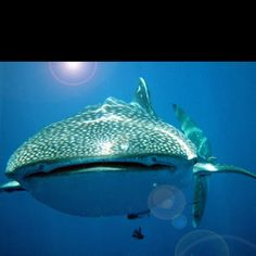 Already been, but dying to go back! Diving in Koh Tao, Thailand! Beautiful!