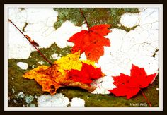 Red & Yellow Leaves on White Paint Splotch with Green Moss. By Wendi Kelly.