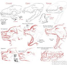 Wolf skulls and snarls reference by Chickenbusiness.d… on Wolf skulls and snarls reference by Chickenbusiness. Animal Sketches, Animal Drawings, Drawing Sketches, Art Drawings, Wolf Drawings, Drawing Ideas, Art Reference Poses, Drawing Reference, Figure Drawing