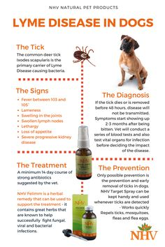 Lyme disease in dogs is very common and sometimes can turn fatal - To help your dog heal, it is important to help the organs effected, improve immune function and help the body fight off the infection. NHV Felimm contains a variety of potent herbs that he Lyme Disease In Dogs, Deer Ticks, Dog Itching, Bacterial Infection, Holistic Remedies, Lymph Nodes, Pet Health, New Tricks, Dog Leash