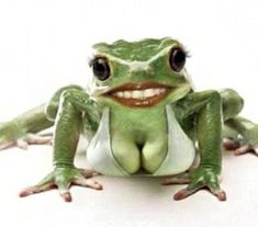 back from Beirut, Lebanon. Even a frog looks pretty. Too much plastic surgery.Coming back from Beirut, Lebanon. Even a frog looks pretty. Too much plastic surgery. Frog Pictures, Funny Animal Pictures, Cute Pictures, Animals And Pets, Funny Animals, Cute Animals, Frog Quotes, Funny Frogs, Frog Art