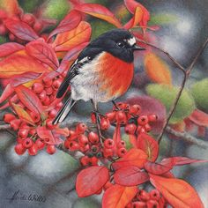 Heidi Willis - Scarlet Robin and Cotoneaster Watercolor Animals, Watercolor And Ink, Watercolor Flowers, Decoupage, Bird Artists, Australian Birds, Cute Birds, Wildlife Art, Beautiful Birds