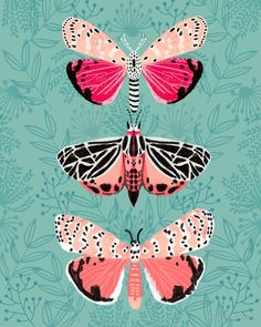 Lepidoptery No. 6 by Andrea Lauren  by Andrea Lauren