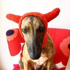 Ewww Valentine's Day getting closer.  -------------------------------------------------- #Füge #FügeDogwear #FügeDevil #whippet #whippetsofinstagram #ilovemywhippet #greyhound #italiangreyhound #iggy #dog #dogstagtam #dogsofinstagram #dogwear #doghat #hat #snood #snoods #cutedog #puppy #instahuning #instadaily #winter #cold #food #love #valentine #valentinesday #handmade #wrappedup #crochet by fugedogwear #lacyandpaws