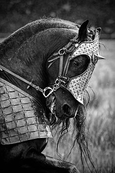Although I don't approve of how much force is being used on the horse, this is a gorgeous horse and armour