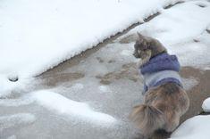 Cat Hoodie :: Makin' Me Purr :: Free Knitting Pattern! Crazy Cat Lady, Crazy Cats, Free Knitting, Knitting Patterns, Knitting Ideas, Knitted Cat, Hoodie Pattern, Cat Sweaters, Cat Crafts