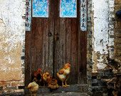 Travel Photography Animal Photography Chickens by Door Yangshuo China
