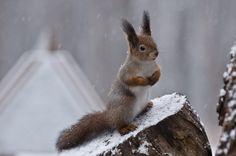 First snow... by Tatiana Fomina, via 500px