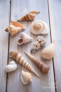 Seashell Collection by Jan Bickerton