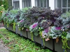 The Impatient Gardener: How to plant a rockin' window box -- definitely digging the incredible, (mostly) edible window box.
