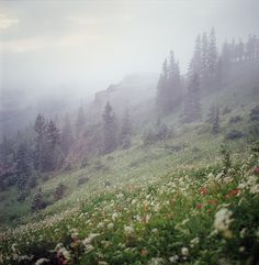 lyricalsycamore:  the moody landscapes (five of five) by manyfires on Flickr.