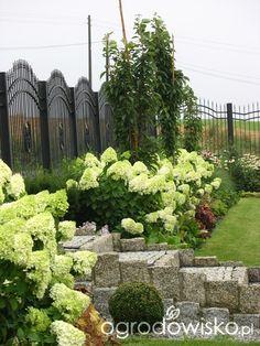 Hydrangea Paniculata, Hydrangea Garden, Garden Planning, House Design, Landscape, Plants, Landscaping Ideas, Gardens, Hydrangeas