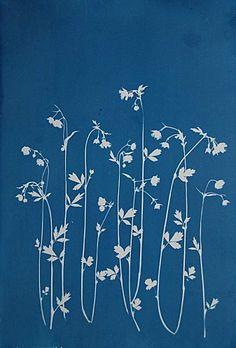 cyanotype / blue print by Anna Maria Bellmann