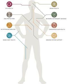 LifePak Nano targets... Lifepak Nano, Nu Skin, Aging Process, Anorexia, Anti Aging, Vitamins, Healing, Toe, Magic