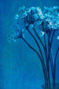 Blue Botanical by Jeff Stanford