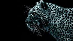 Snow Leopard – 1080p HD Wallpaper