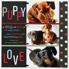 Scrap His Friends ~   Save the memories of your dog's best buddies too! Stack three 4-x-6 shots and use large fonts to create this fun layout. Use a circle punch to add a pop of color to the page.