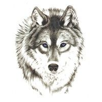 60 Awesome wolf tattoos + more about the meaning of wolves. Designs include tribal and howling wolves, wolf head and paw tattoos. Wolf Tattoo Design, Tattoo Designs, Wolf Tattoos, Celtic Tattoos, Tribal Tattoos, Tatoos, Henna Tattoos, Geometric Tattoos, Tatoo Art