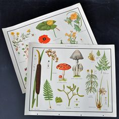 Set of 2 Mushroom / Poppy Teaching Aid Prints