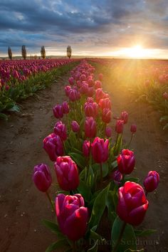 I love tulips! Flowers make me happy. Beautiful Flowers, Beautiful Pictures, Tulip Fields, Amazing Nature, Beautiful World, Mother Nature, Flower Power, Planting Flowers, Landscape Photography