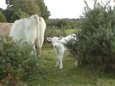 Peekaboo in the New Forest
