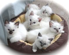 A basket full!
