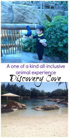 Discovery Cove in Orlando is one of the coolest all-inclusive experiences with animal encounters. This park offers an animal education in a beach resort setting. Orlando Parks, Seaworld Orlando, Orlando Resorts, Orlando Florida, Florida Vacation, Florida Travel, Travel Usa, Florida 2017, Orlando Vacation