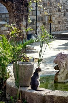 Black and white cat in a castle courtyard in Bodrum, Turkey. See more #cats from this area at http://travelling-cats.blogspot.be/2014/05/cats-from-bodrum-turkey.html