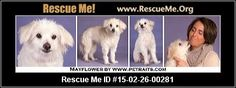 Rescue Me ID: 15-02-26-00281Mayflower (female)  Maltese Mix  Age: Senior  Compatibility:Good w/ Most Dogs, Good w/ Most Cats, Good w/ Kids and Adults Personality:Low Energy, Average Temperament Health:Spayed, Vaccinations Current  Mayflower is a gentle, mellow, sweet and spunky, 17-pound, nine-year-old, female American Eskimo/Maltese-mix looking for a loving guardian. Mayflower gets along famously with all other animals but she absolutely adores other little dogs. She's fine…